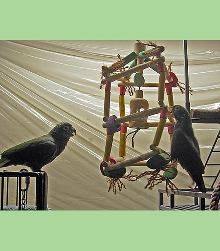 simple guide to homemade parrot toys